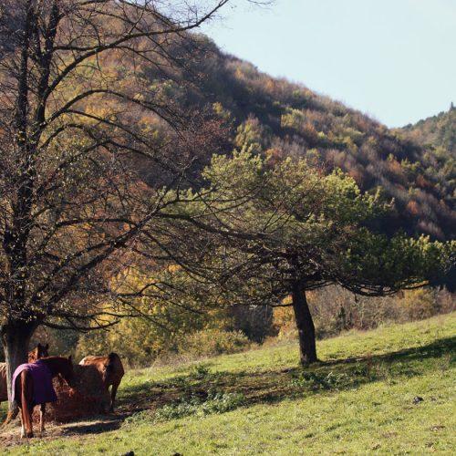 Pupilaje La vall de Camprodon
